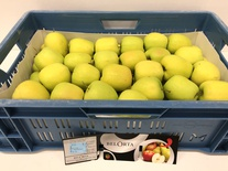 Golden Delicious 11kg 70+