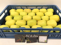 Golden Delicious Gelegt 7kg 80+