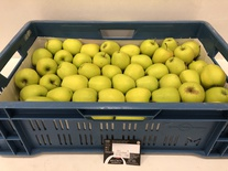 Golden Delicious 11kg 60+